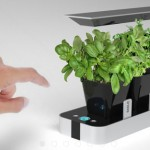BB Little Garden Brings Aromatic Plants In Your Kitchen