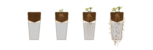 Bios Urn Biodegradable Urn