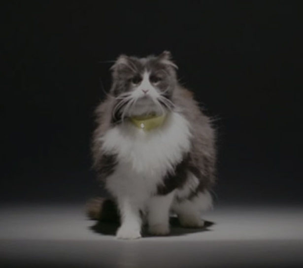 Catterbox Cat Collar Translates Your Cat Voice Into Human Voice by Mars' Temptations Lab
