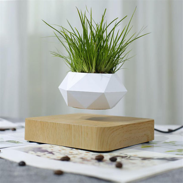 Airsai Floating Bonsai Plant by Floately