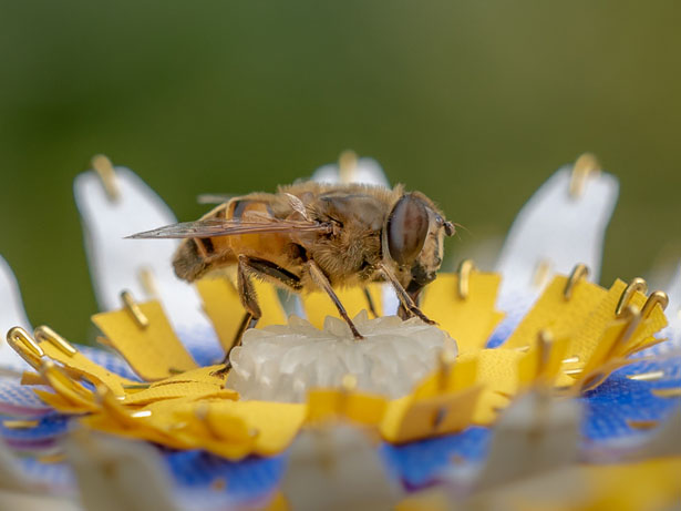 Food for Buzz - Artificial Flowers for Urban Bees by Matilde Boelhouwer