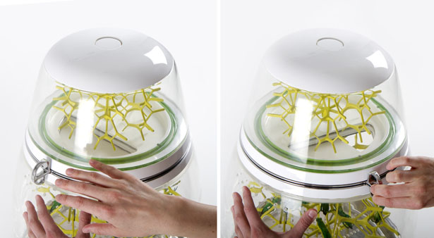 Lepsis Terrarium for Growing Edible Bugs by Mansour Ourasanah