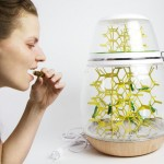Lepsis Terrarium for Growing Your Food ... Bugs!