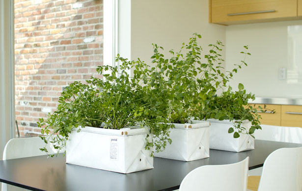 Let S Patch Self Watering Planter For Herbs And Greens