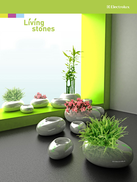 Using Living Stones, You Don't Need To Water Your Plant