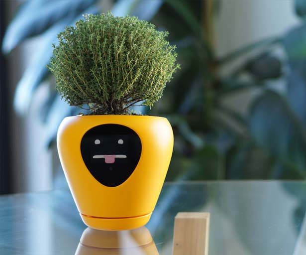 Lua Smart Planter by Vivien Muller Design