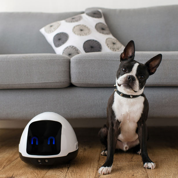 MIA: A Friendly Robot to Entertain Your Dogs and Cats