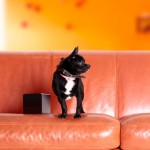 PetCube : Play with Your Pet Anywhere and Share The Moment With Your Friends and Family