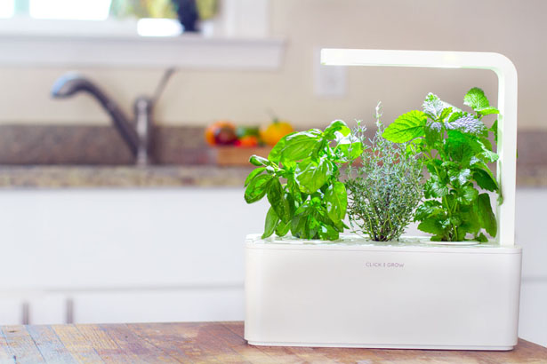 Grows Herbs and Plants with Smart Herb Garden In Your Small Apartment