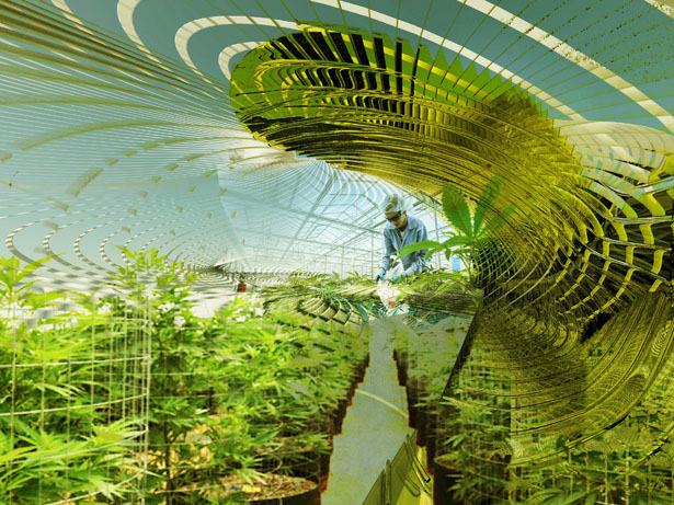 Sustainable Hemp and Medical Marijuana Farm by Margot Krasojevic
