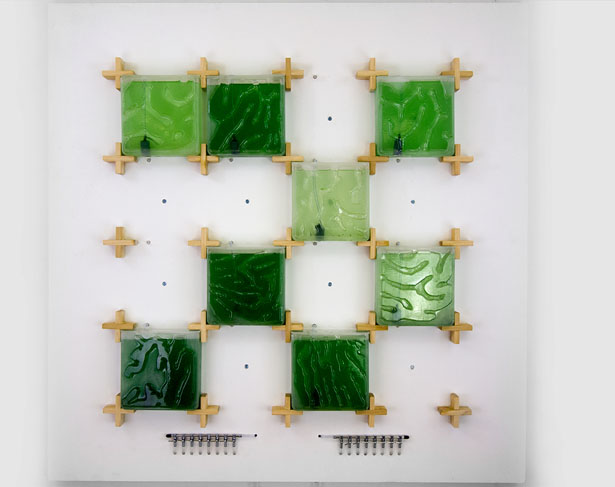 Start Home Algae Farming with The Coral by Hyunseok An of Ulrim
