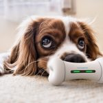 WickedBone: Smart and Interactive Dog Toy Keeps Your Dog Busy and Have Fun While You're Away